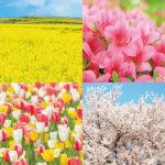 JR-east_Flower (1)