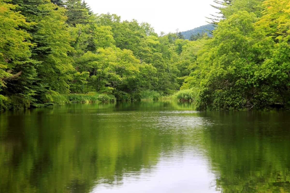 Kumobaike Pond