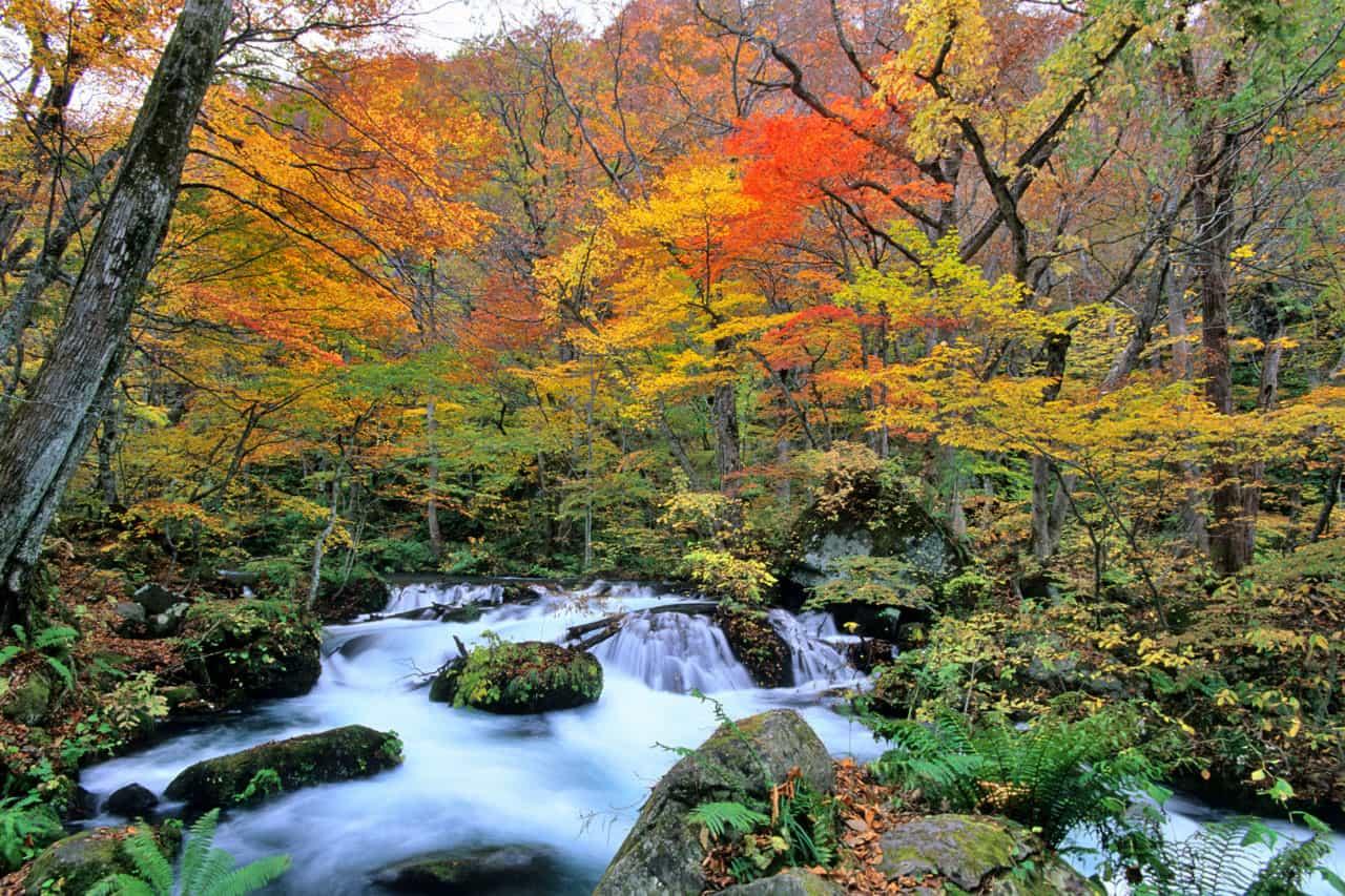 ลำธารโออิราเสะในฤดูใบไม้ร่วง