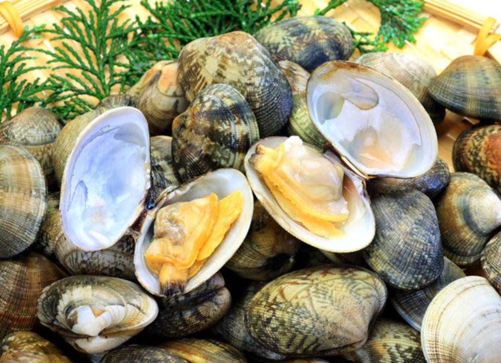 อาหารประจำฤดูใบไม้ผลิของญี่ปุ่น : หอยอาซาริ (หอยตลับญี่ปุ่น)