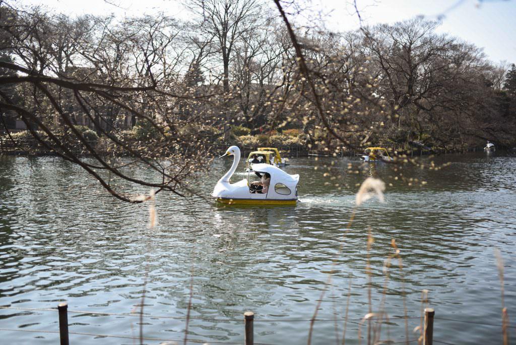 ถีบเรือหงษ์เล่นกันที่สวนอิโนะคะชิระ (Inokashira Park) ในย่านคิชิโจจิ (Kichijoji)