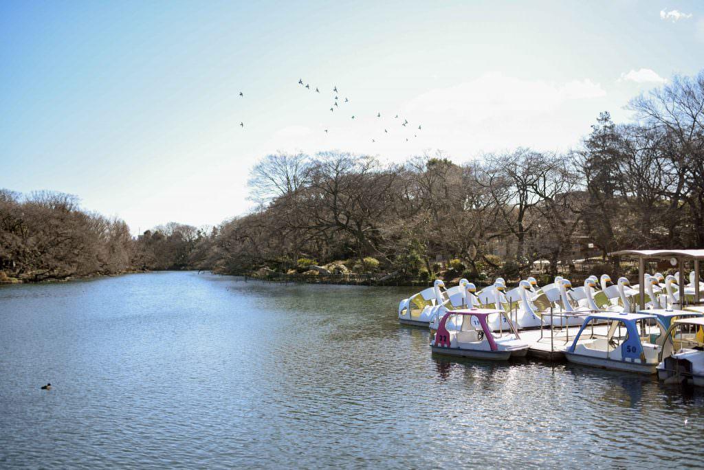 บรรยากาศของสวนสาธารณะอิโนะคะชิระ (Inokashira)