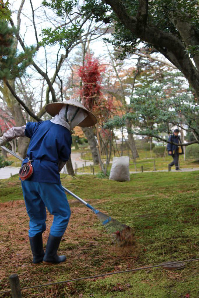 เจ้าหน้าที่ดูแลรักษาต้นไม้ของสวน Kenrokuen (เคน-โระ-คุ-เอ็น)