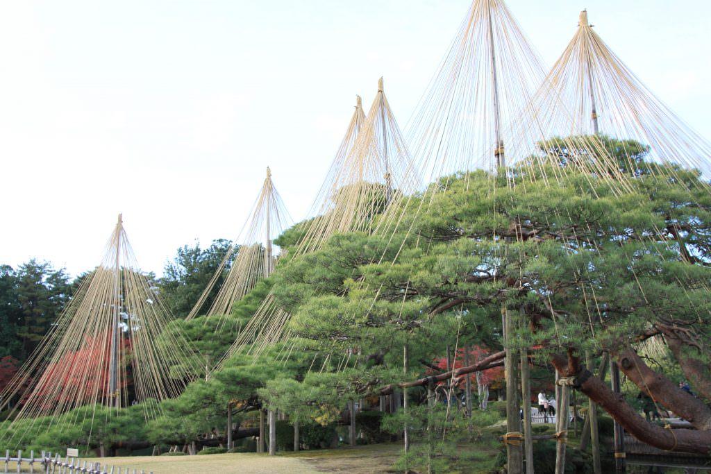 ขนาดของ Yukitsuri แตกต่างกันไปได้ แล้วแต่ไซส์ของต้นไม้