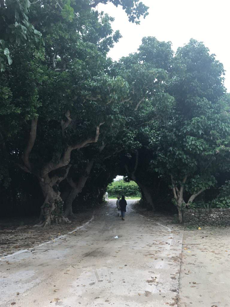 อุโมงค์ต้นไม้ที่อยู่่ใกล้ๆ Kondoi Beach