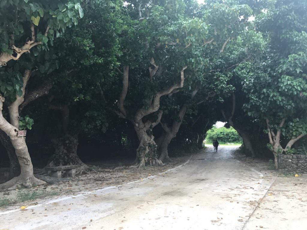 อุโมงค์ต้นไม้ที่อยู่่ใกล้ๆ หาดคนโดะอิ (Kondoi Beach)