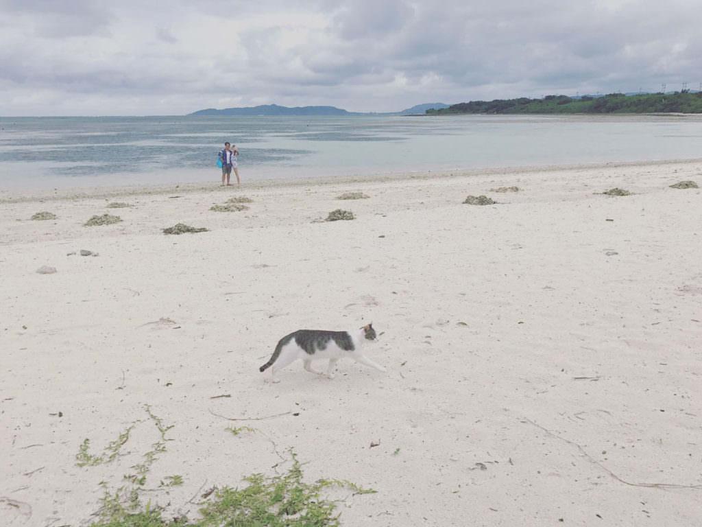 แมวเหมียวเดินเล่นที่คะอิจิ (Kaiji Beach) อย่างสบายใจ
