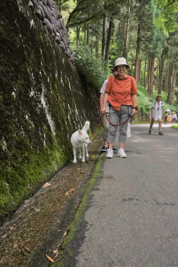 นักท่องเที่ยวมาเที่ยวที่ชิระกะวะโงะ (Shirakawago)