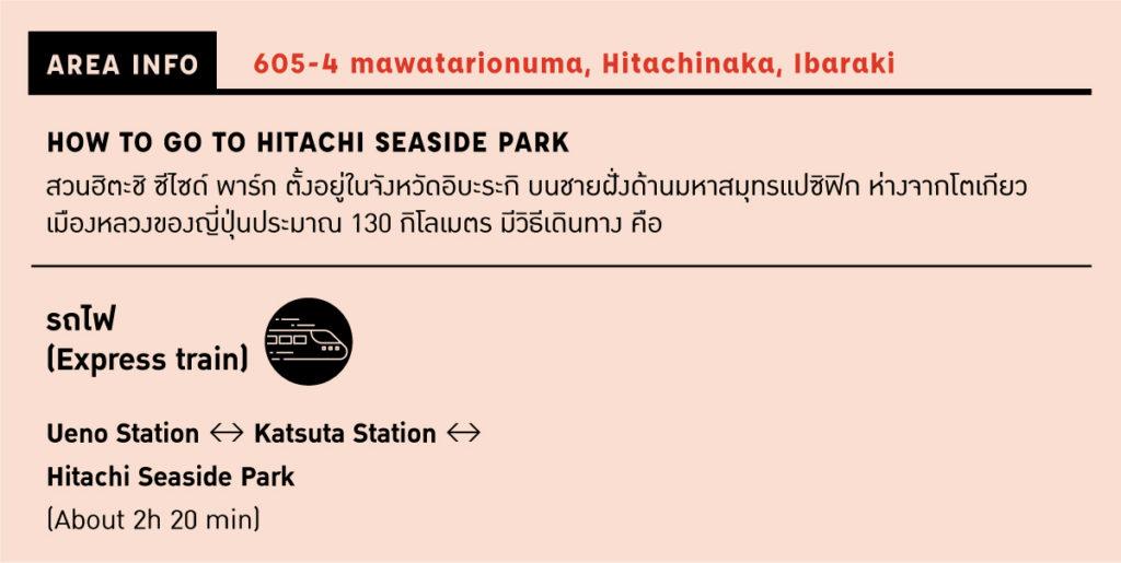 วิธีการเดินทางไปยังสวนฮิตะชิ ซีไซด์ พาร์ก (Hitachi Seaside Park) ในจังหวัดอิบะระกิ (Ibaraki)