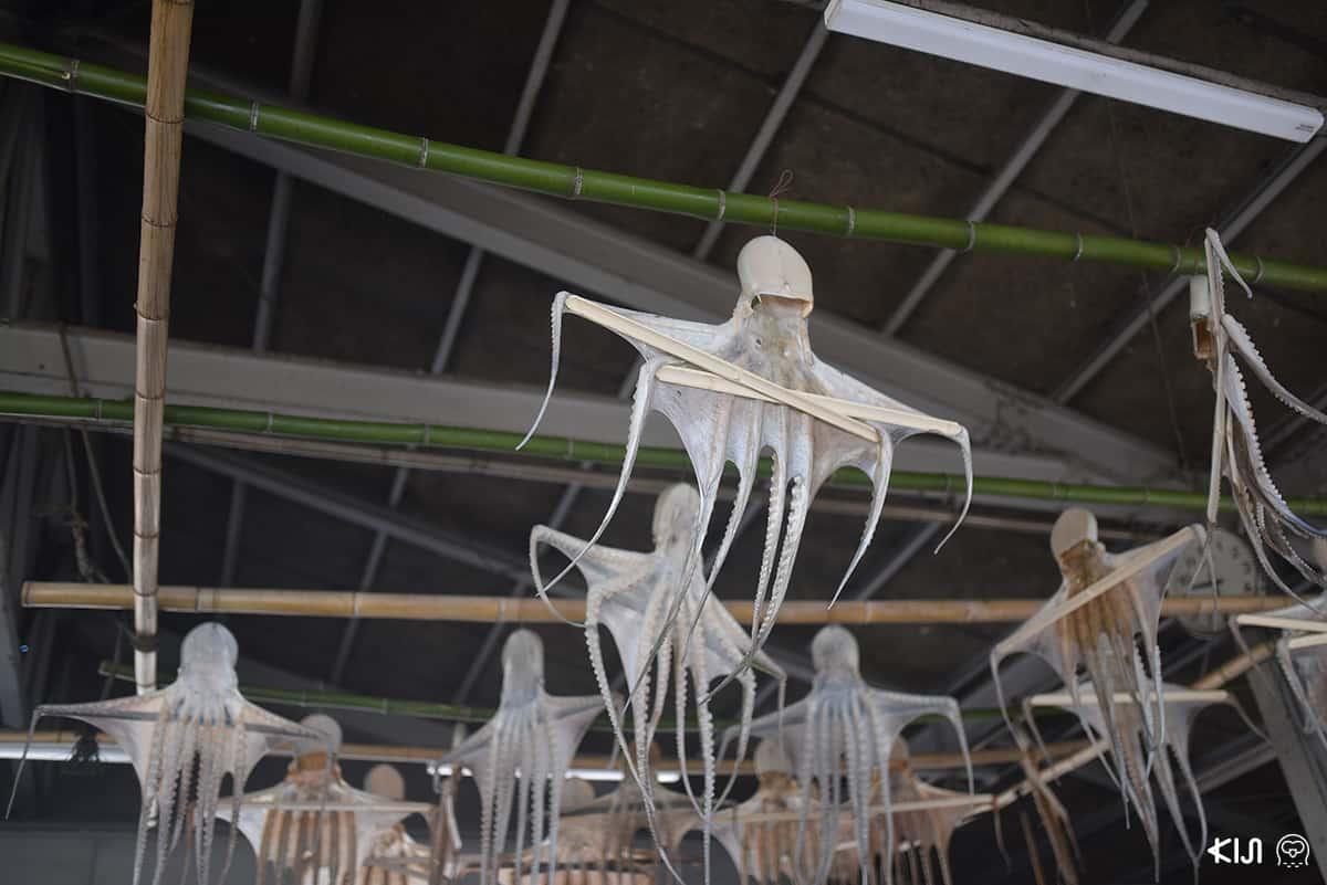 ชาวประมงที่หมู่บ้านชิโมะซุย (Shimosui) นิยมนำปลาหมึกยักษ์มาตากแห้ง