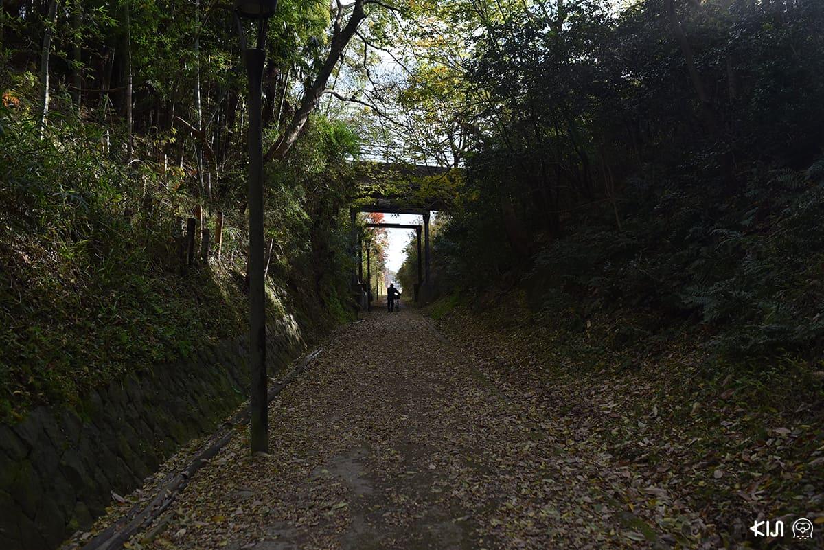 ทางจักรยานชมธรรมชาติที่ดัดแปลงมาจากเส้นทางรถไฟสายเก่า