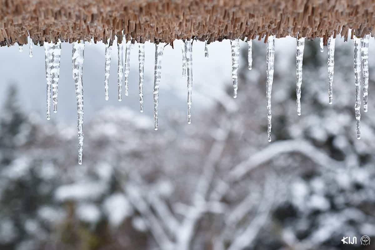 น้ำแข็งบน หุบเขาอิยะ (Iya Valley) โทคุชิม่า (Tokushima)