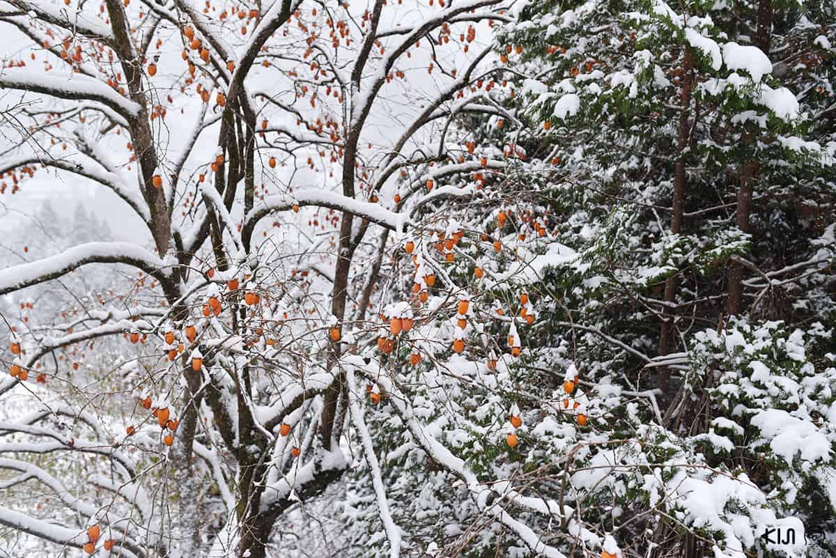 หิมะ หุบเขาอิยะ (Iya Valley) โทคุชิม่า (Tokushima)