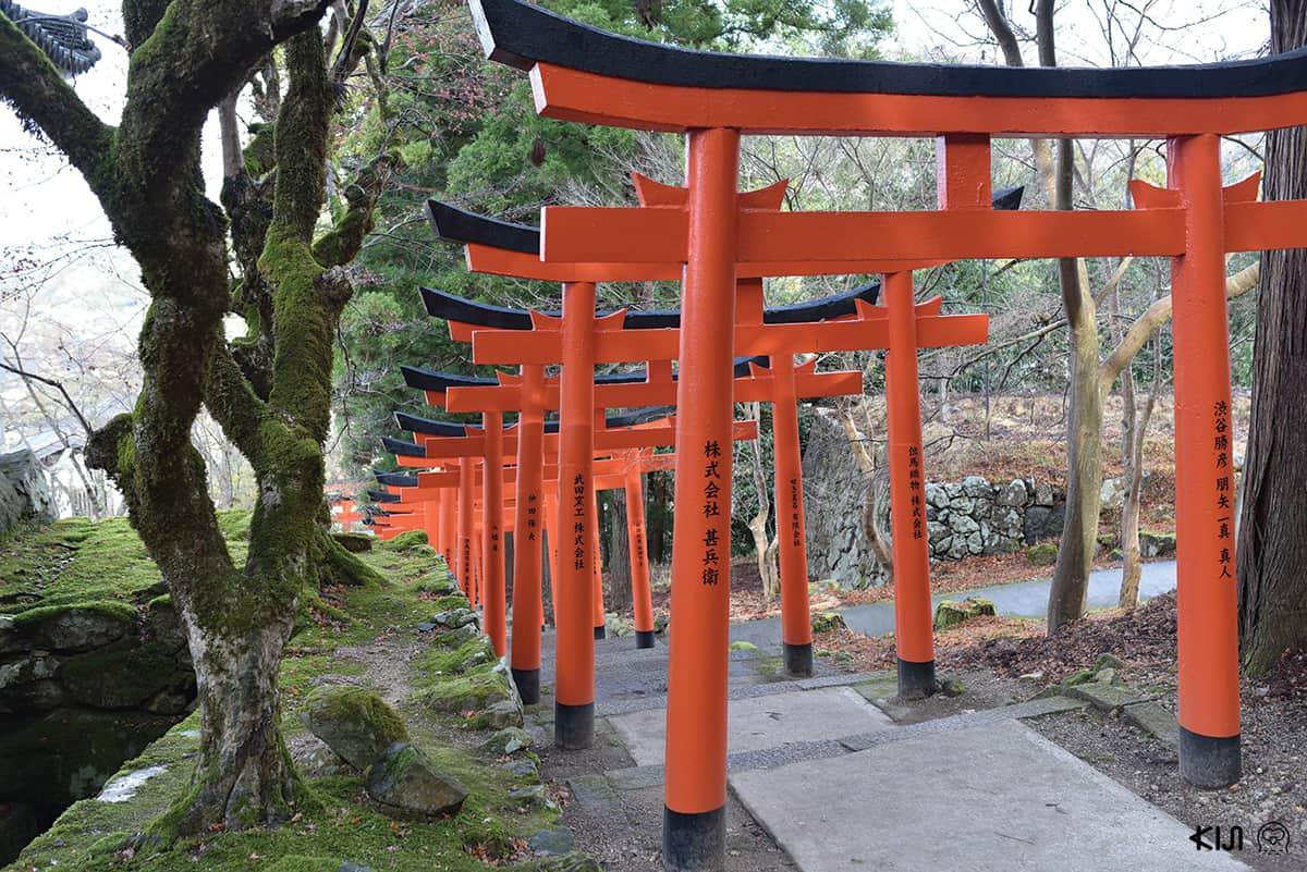 ระหว่างทางเดินขึ้นไปศาลเจ้าอินาริ (Inari) เราจะต้องรอดผ่านประตูโทริอิสีแดงสด 37 ต้น ตั้งเรียงไปตามบันไดสูง 157 ขั้น สวยงามตระการตา
