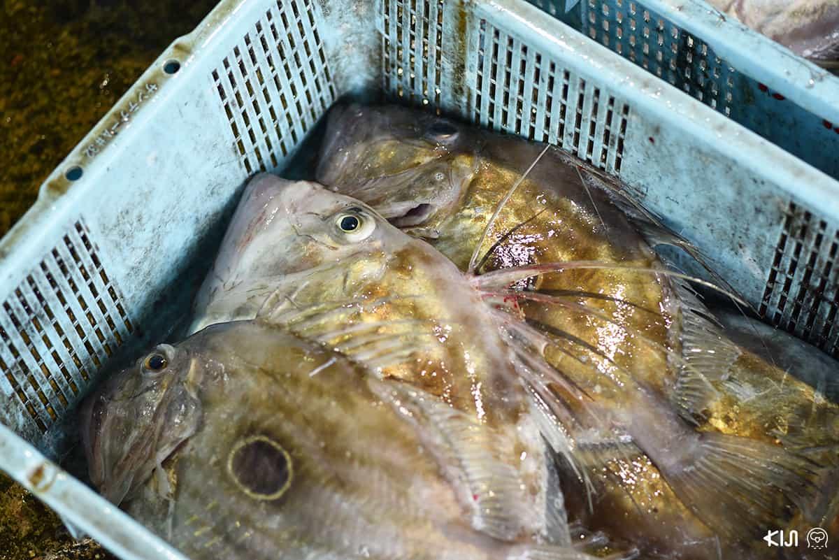 ปลาที่จับได้จาก Ine
