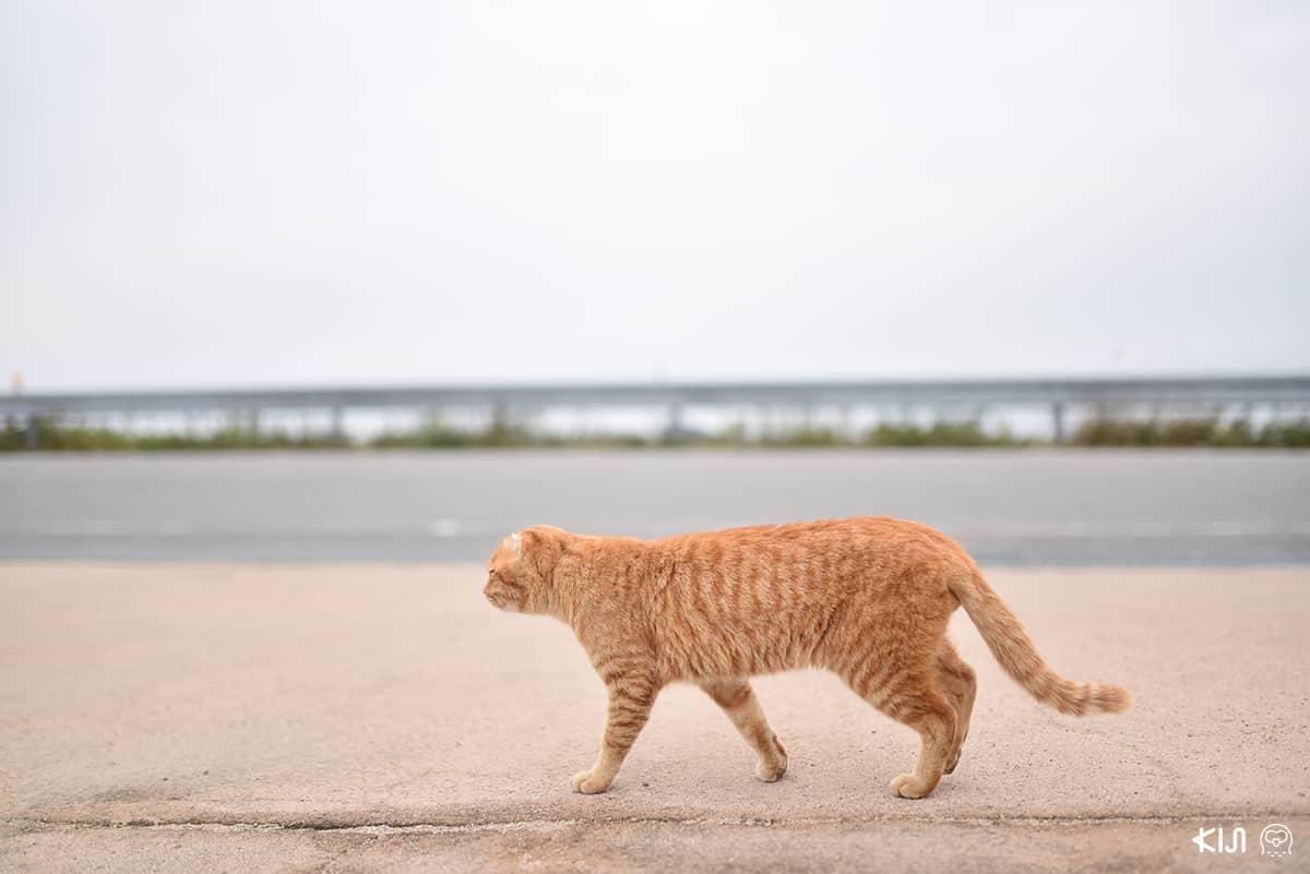 เจ้าแมวเหมียวที่ชิโมะซุอิ (Shimotsui)