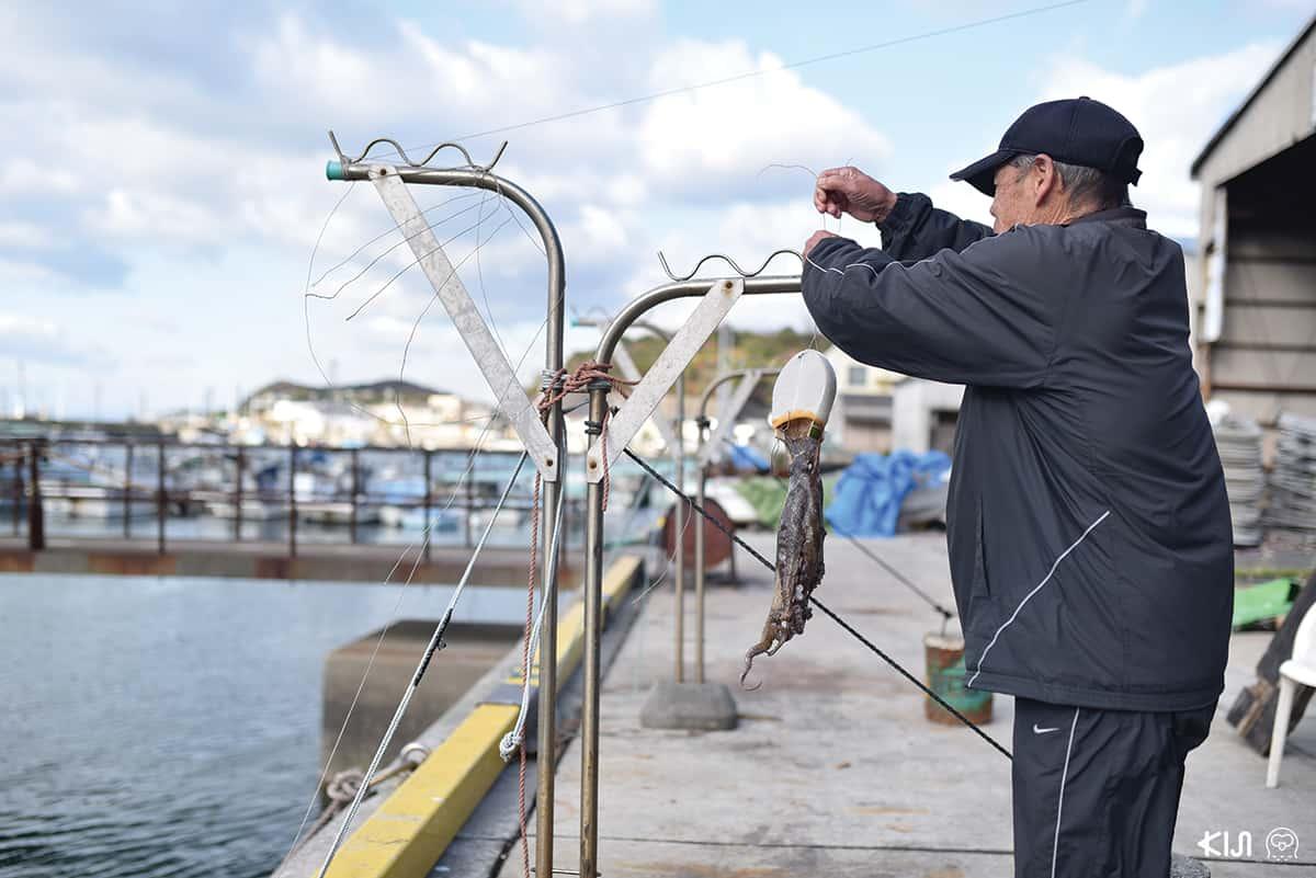 ชาวประมงกำลังนำปลาหมึกยักษ์มาตากแห้ง