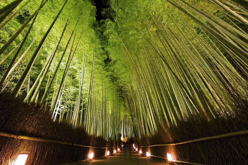 เดินชมป่าไผ่ ที่ Arashiyama