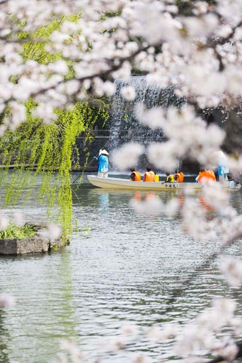 ล่องเรือชมซากุระที่ โอกาคิ (Ogaki)