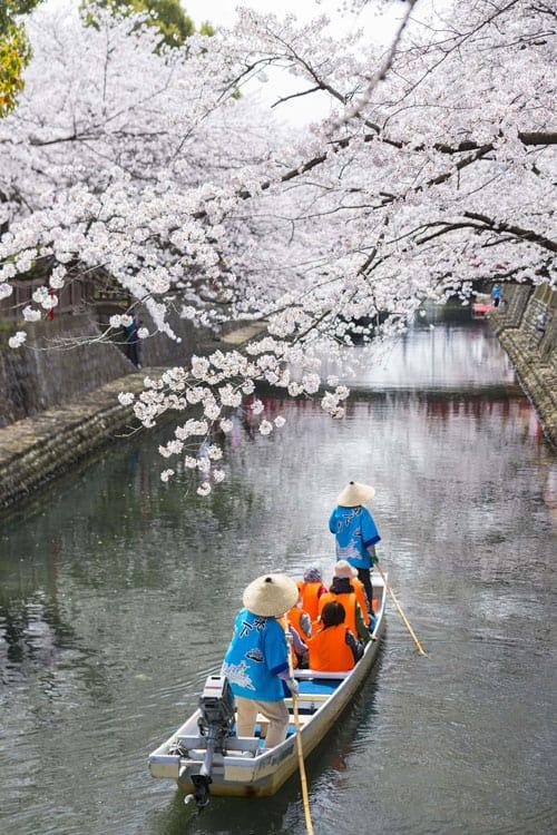 ช่วงที่ซากุระกำลังเบ่งบานในเมืองโอกาคิ (ราวๆ ปลายเดือนมีนาคมถึงเดือนเมษายน)