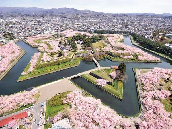 มองวิวจากบน Goryokaku Tower ในช่วงซากุระบาน