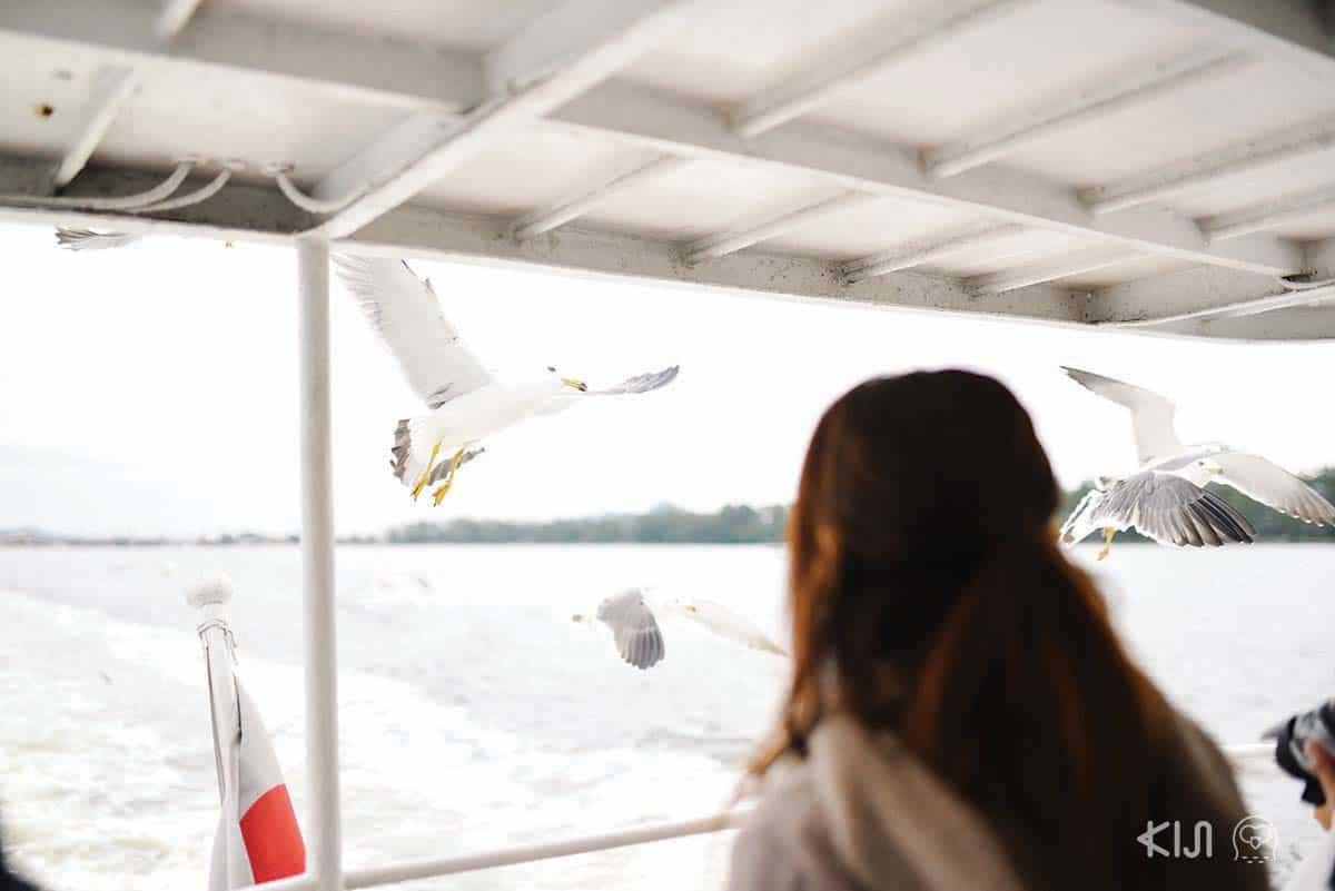 ให้ขนมนกนางนวลเล่นขณะนั่งเรือไปด้วยก็ยิ่งเพิ่มความสนุกมากขึ้นอีก