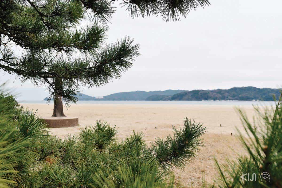 หาดทรายขาว ต้นสนเขียว ที่อามาโนะฮาชิดาเตะ