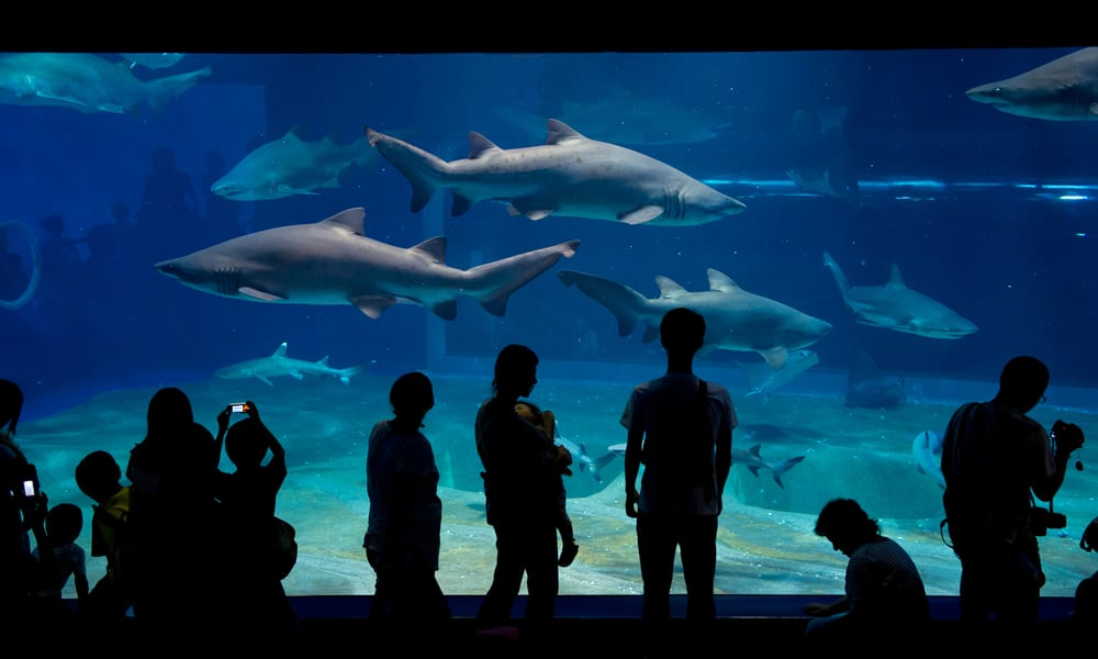 Aqua World Oarai