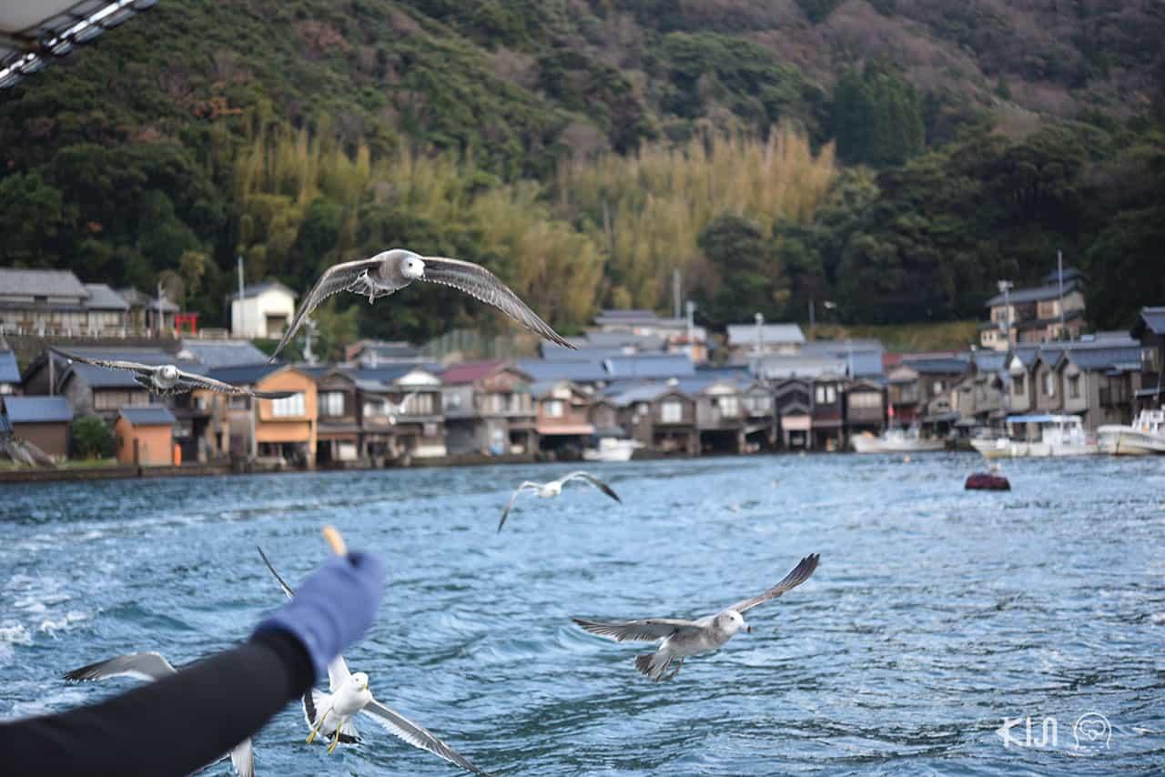 มีขนมฮานามิถุงเล็กๆ แจกเพื่อให้อาหารนกนางนวลในขณะที่เรือกำลังแล่นอยู่ (Ine Fishing Village)