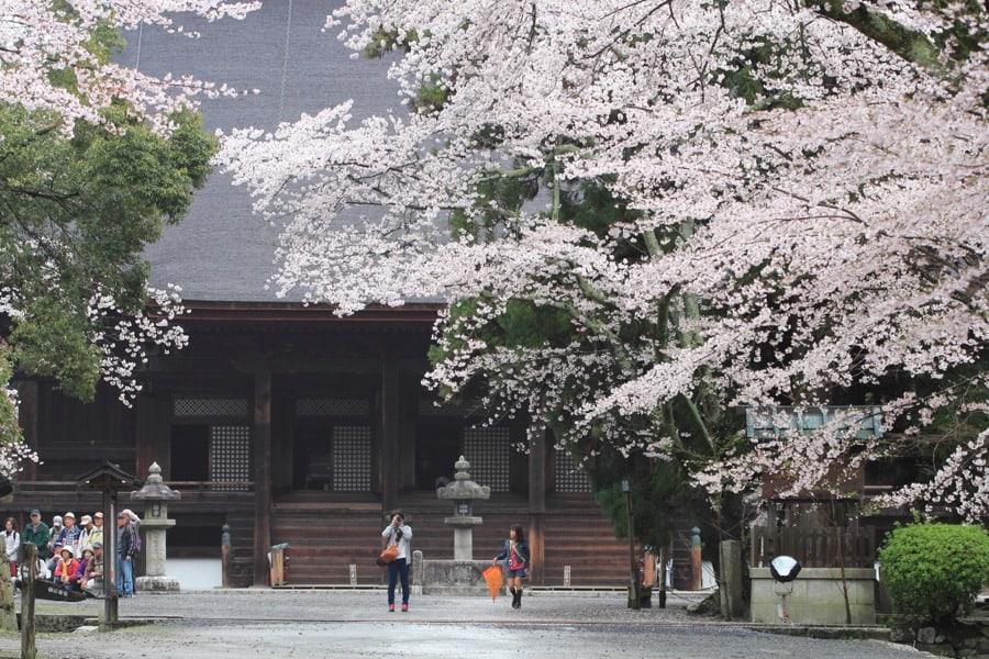 วัดมิอิเดระ (Mii-dera) ในฤดูใบไม้ผลิ