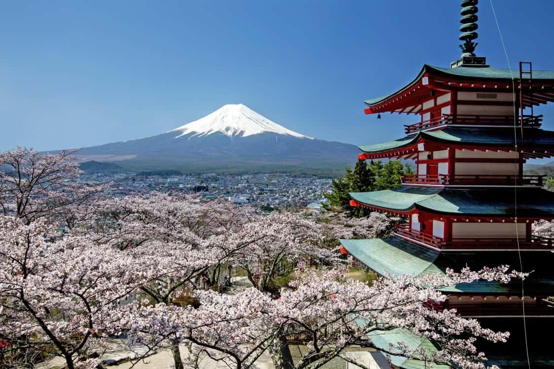 จุดถ่ายรูปสุดฮิตที่เห็นภูเขาไฟฟูจิ เจดีย์แดง (Chureito Pagoda) และต้นซากุระพร้อมกัน
