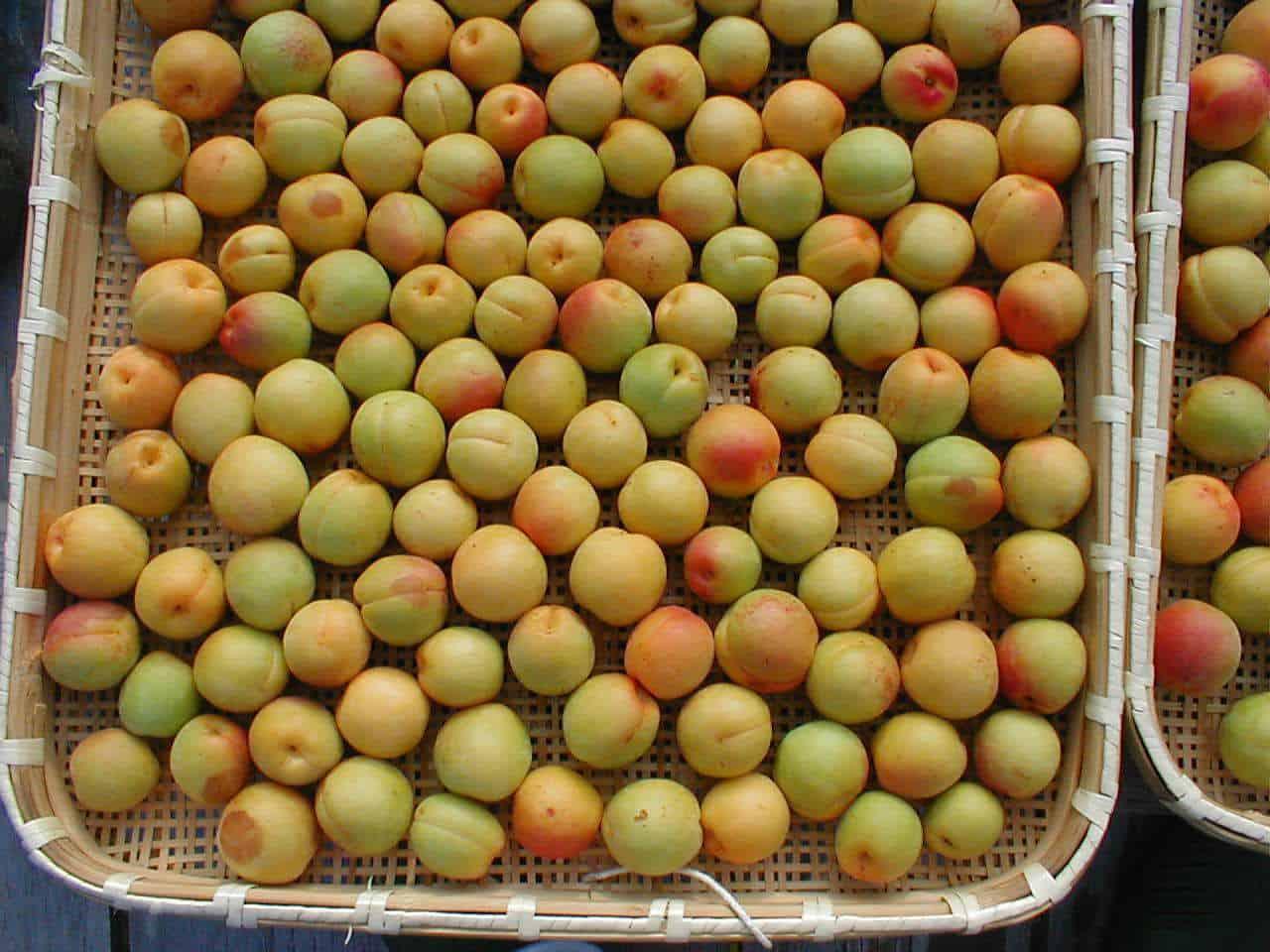 แอปเปิ้ลจากสวนของที่พัก Komaki no Ie