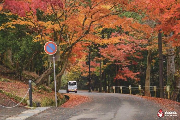 5 สถานที่ชมใบไม้เปลี่ยนสีญี่ปุ่น ที่จัดว่าเด็ด!