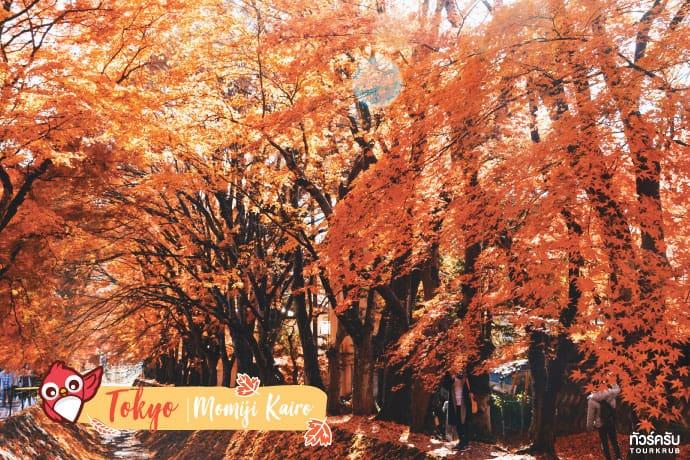 โตเกียว (Tokyo) : อุโมงค์ใบเมเปิ้ล โมมิจิ ไคโร (Momiji Kairo)