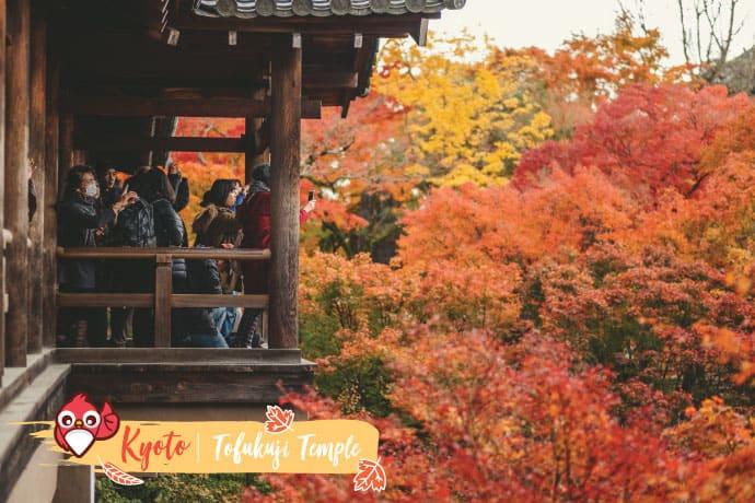 เกียวโต (Kyoto) : วัดโทฟุคุจิ (Tofukuji Temple)