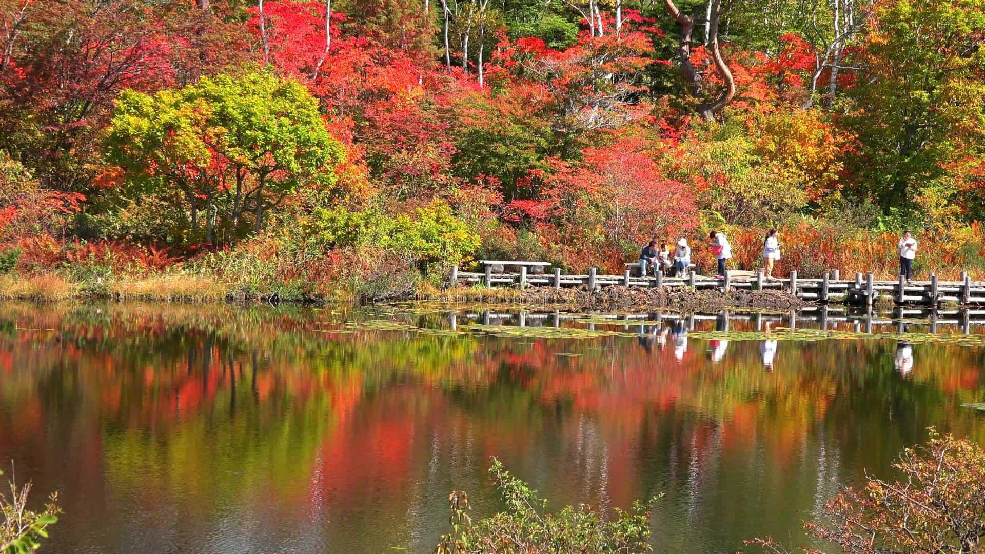 ทะเลสาบโอนุมะ จุดชมใบไม้เปลี่ยนสีในชิกะโคเกน