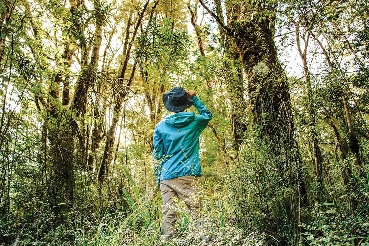 """ชินรินโยคุ"""" (Shinrin-yoku / 森林浴) หรือหมายถึง การอาบป่า"""