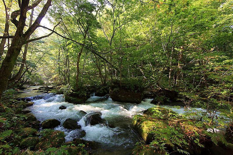 ลำธารโอริราเสะ (Oirase Stream) จังหวัดอาโอโมริ