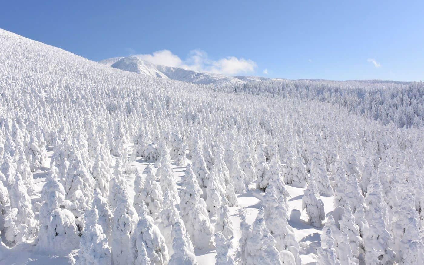 Eastern Japan : ปีศาจหิมะ (Snow Monster)