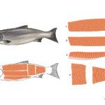Salmon-04