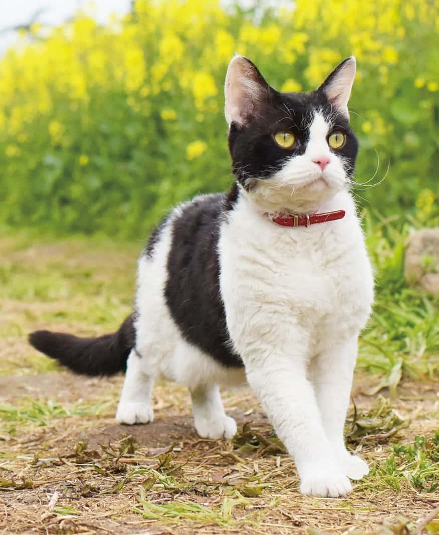 ผม แมว และการเดินทางของเรา : ทุ่งดอกนาโนะฮานะ จังหวัดนากาโน่ (Nanohana)