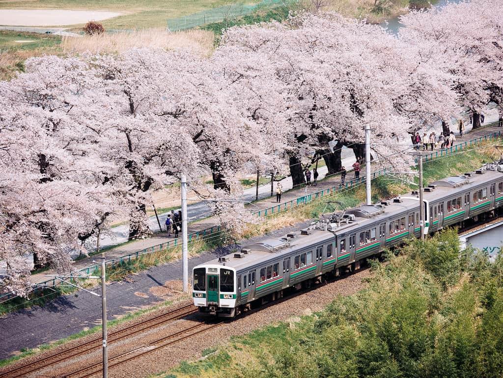 ฮิโตะเมะเซ็มบงซากุระ (Hitome Senbonzakura)