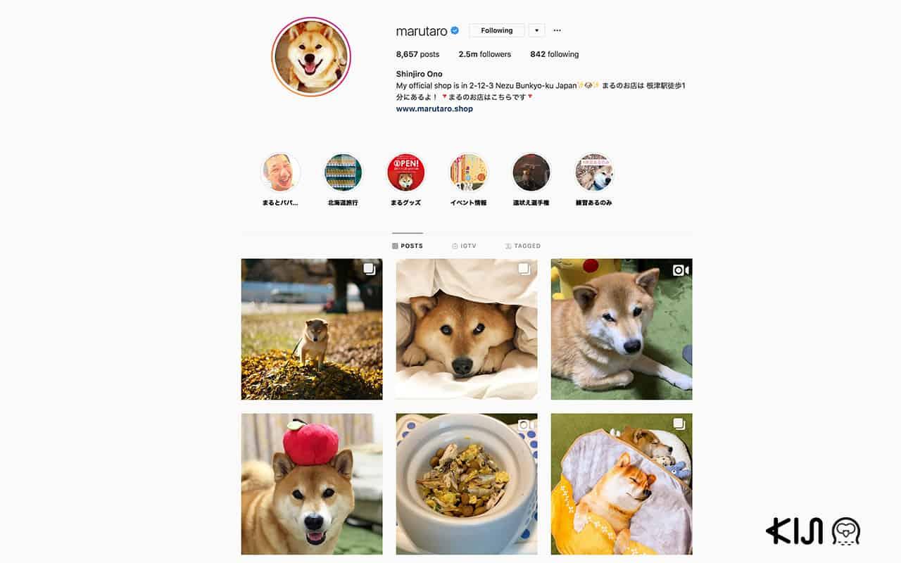 อินสตาแกรม @marutaro ที่เจ้าของได้โพสภาพสุนัขพันธุ์อาคิตะที่ตัวเองเลี้ยงจนโด่งดังเป็นอย่างมาก