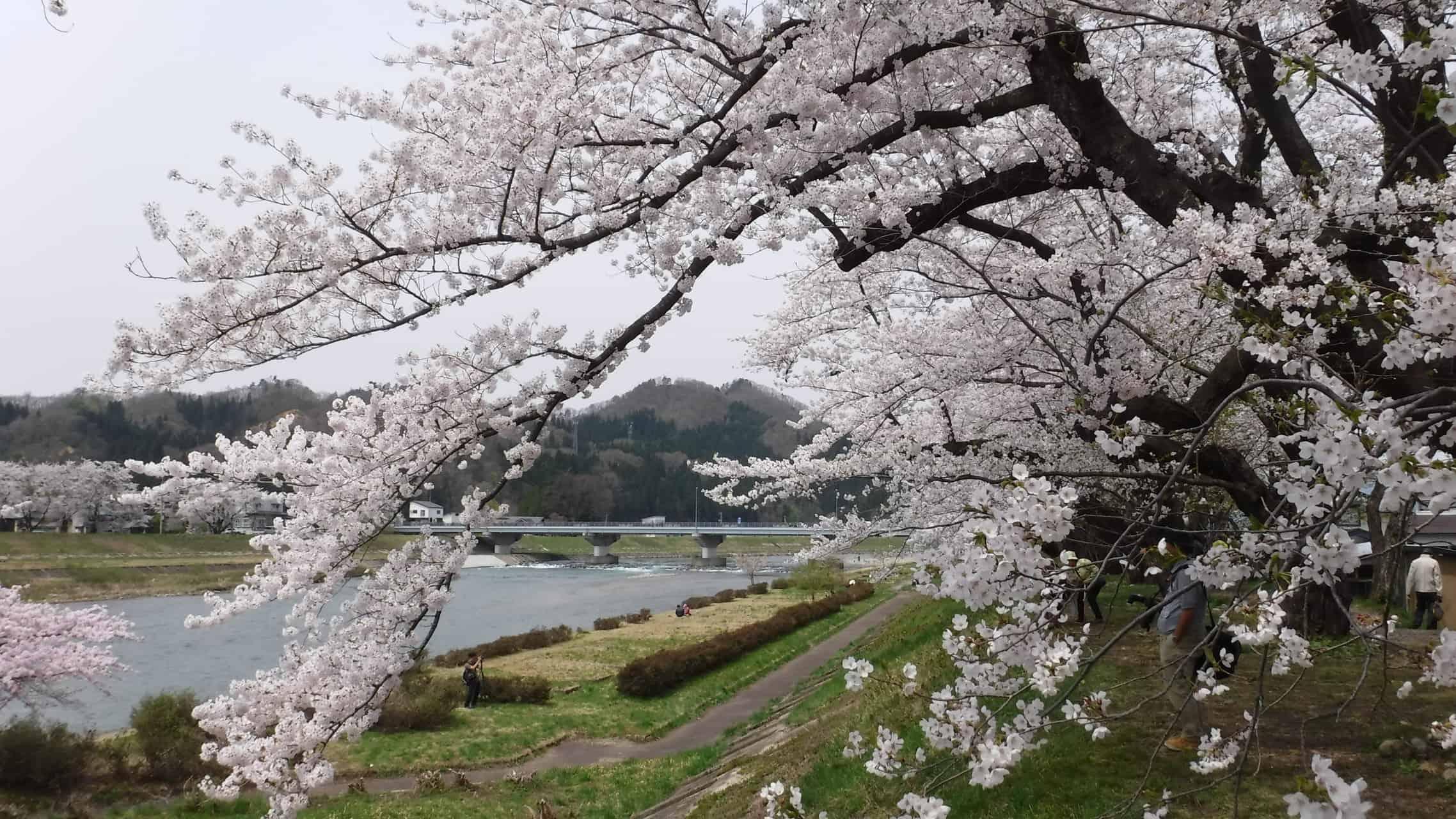 หมู่บ้านซามูไรคาคุโนดาเตะ (Kakunodate Samurai Residences)