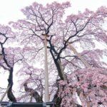 Kasumiga_170425_0018_5-1200×675