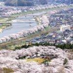 Sakura_2015_04_10_xryybh