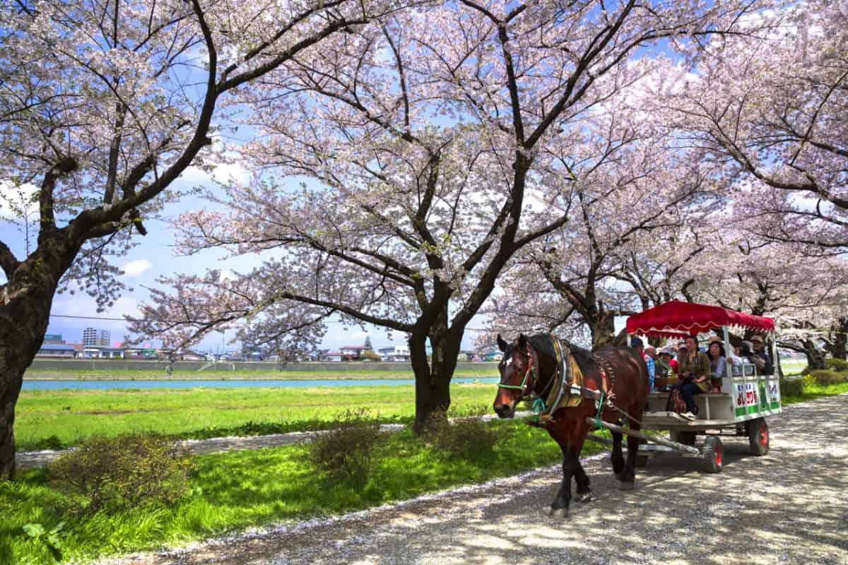 สวนคิตะคามิ เท็นโชจิ (Kitakami Tenshochi Park)
