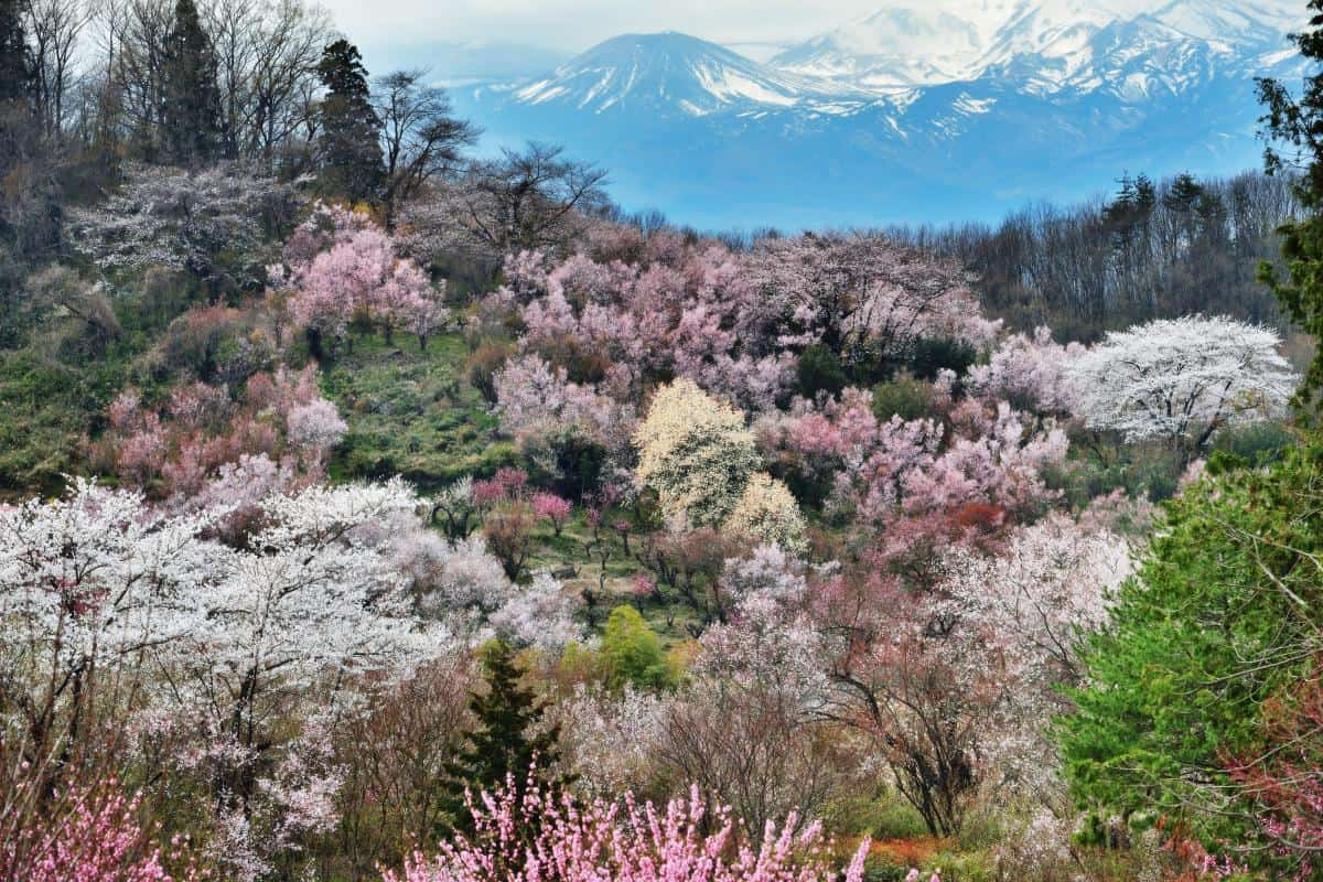สวนฮานามิยามะ (Hanamiyama Park)