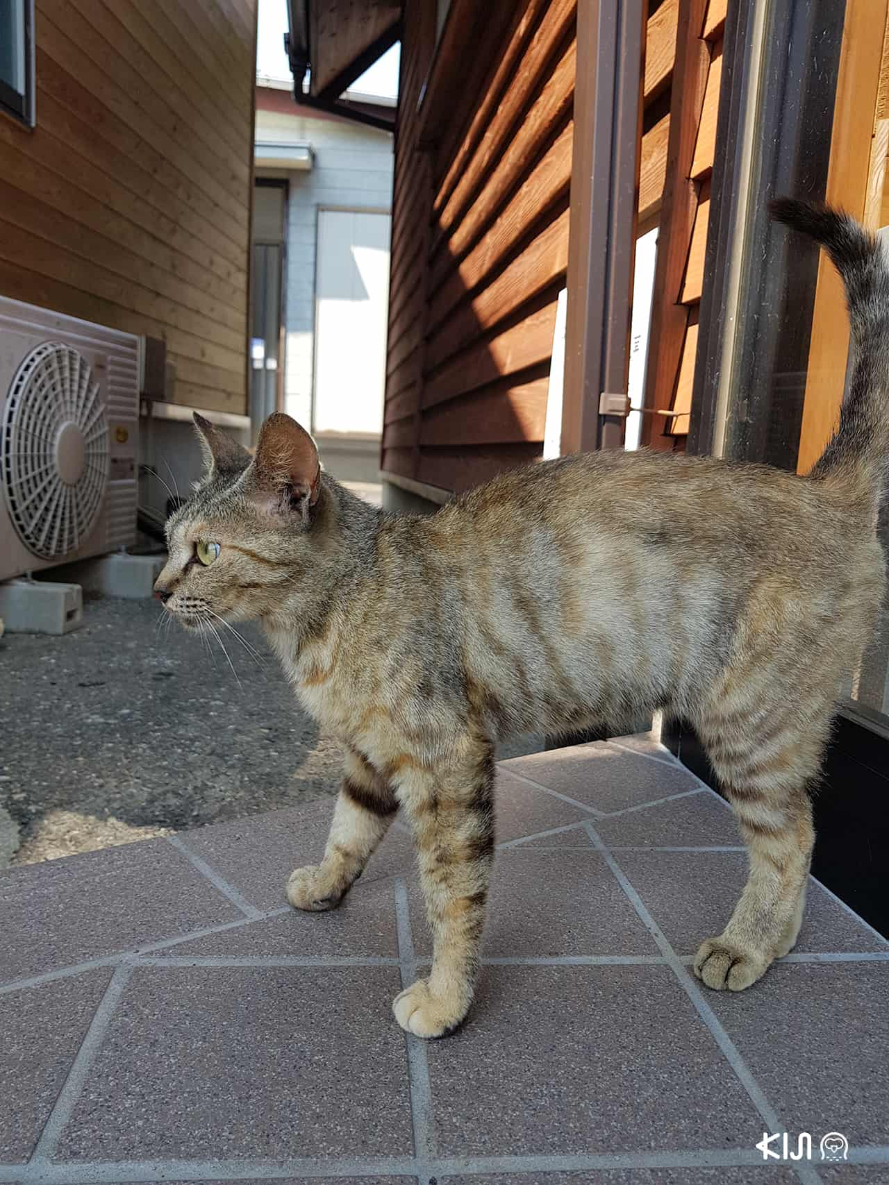ที่ท่องเที่ยวมีแมวในญี่ปุ่น : เกาะลอยเอะโนะชิม่า จังหวัดคานางาวะ