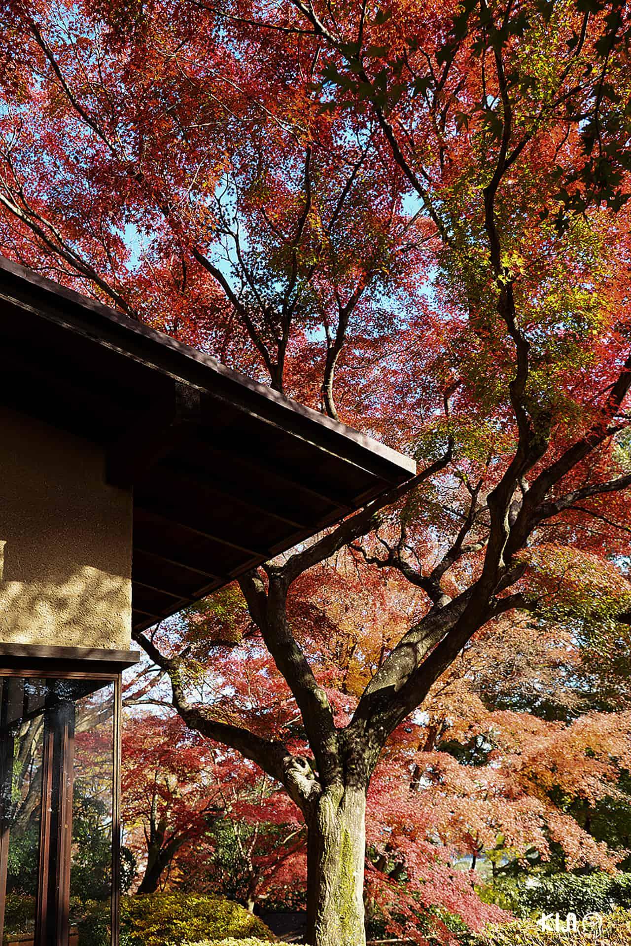 บ้านโชชิคุเคียว